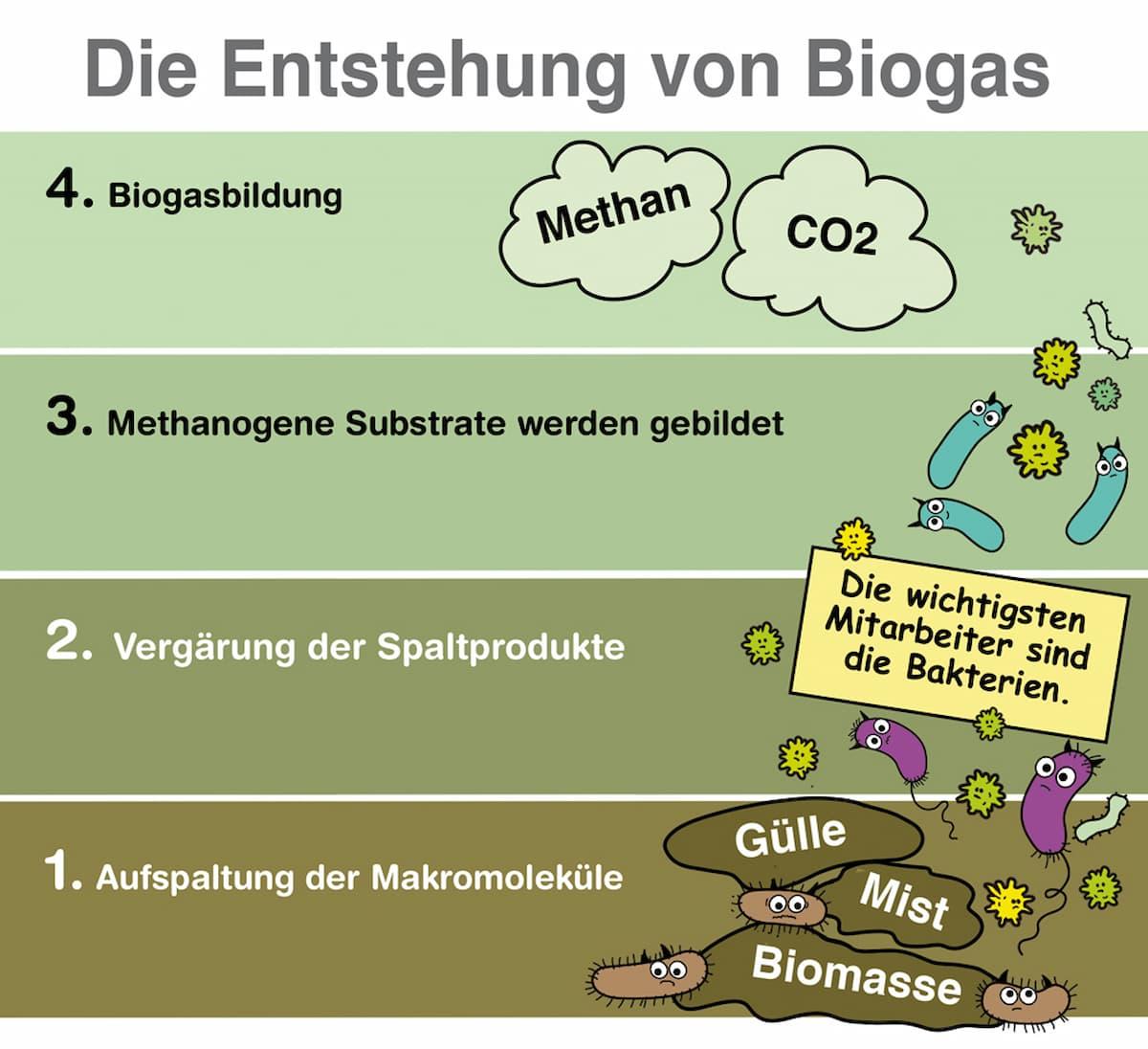 So entsteht Biogas