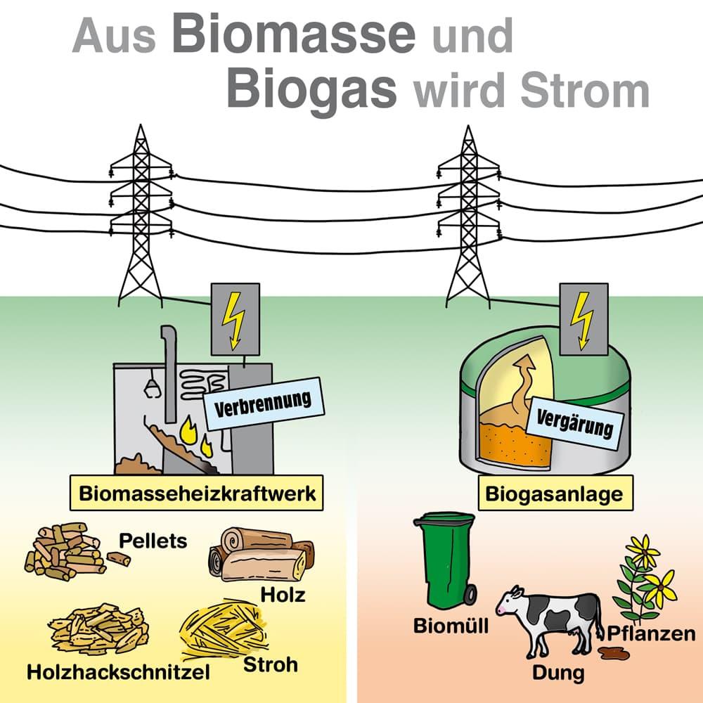 Aus Biomasse und Biogas wird Strom